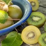 Kiwis verts et jaunes