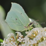 papillons 029