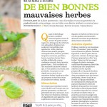 Recettes herbes sauvages 02