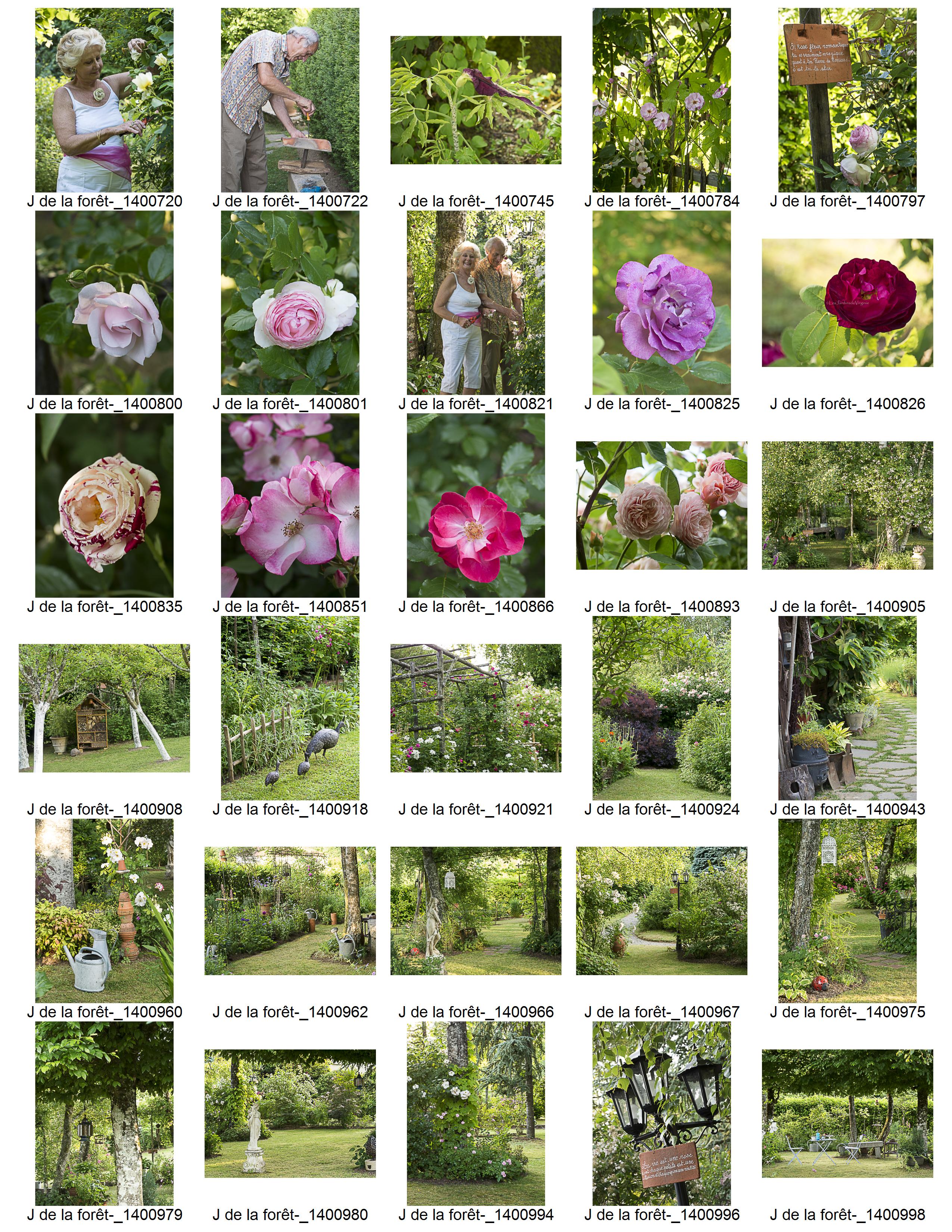 Le jardin de la forêt (87)