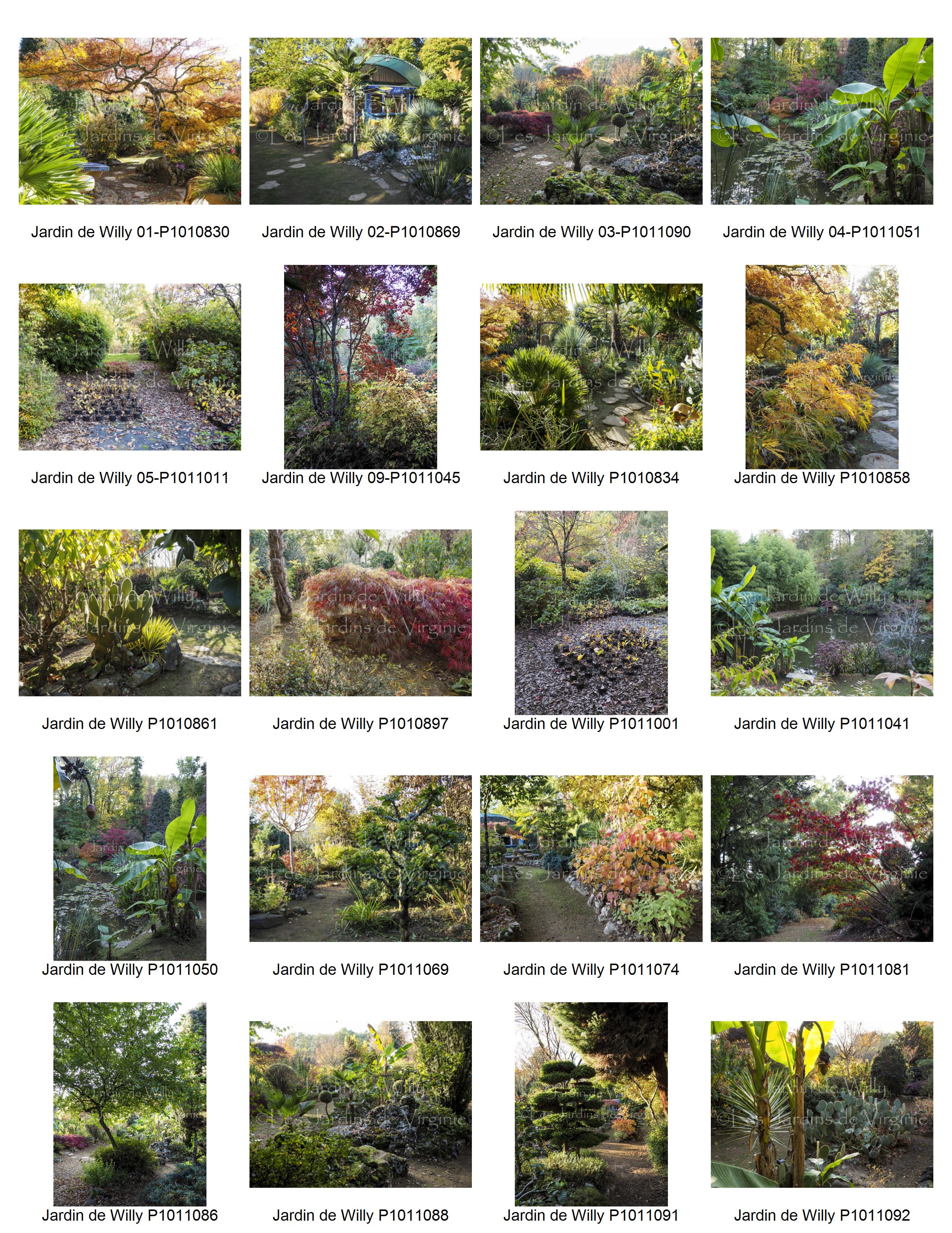 Jardin de Willy P1